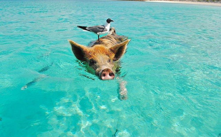 sailo-marsh-harbour-boat-rental--Swim-with-Pigs-bahamas