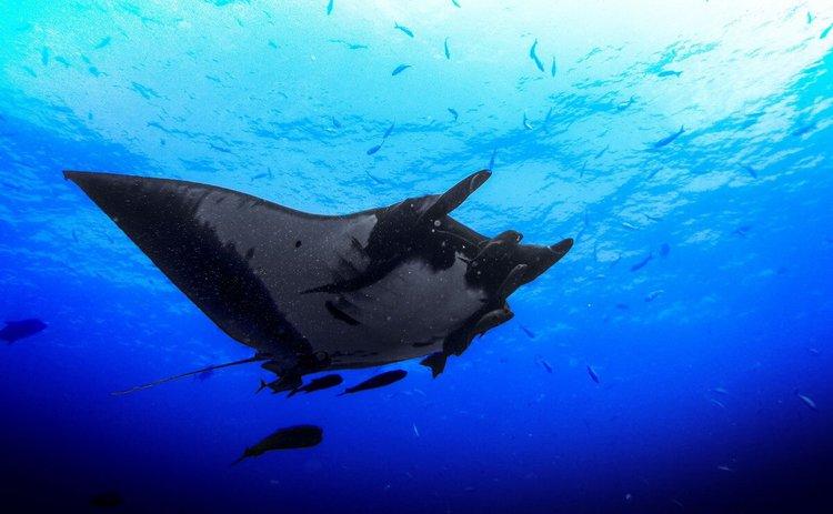 sailing-komodo-island-nusa-tenggara-boat-charter-sailo-diving