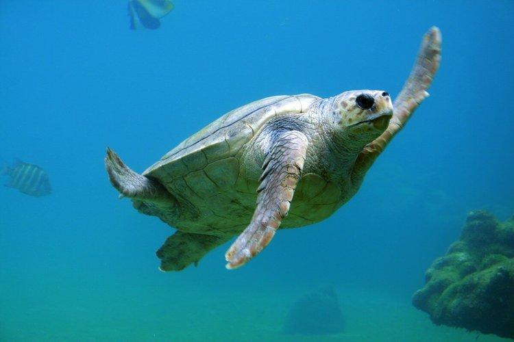 sailo-bimini-boat-rental-turtle-rocks