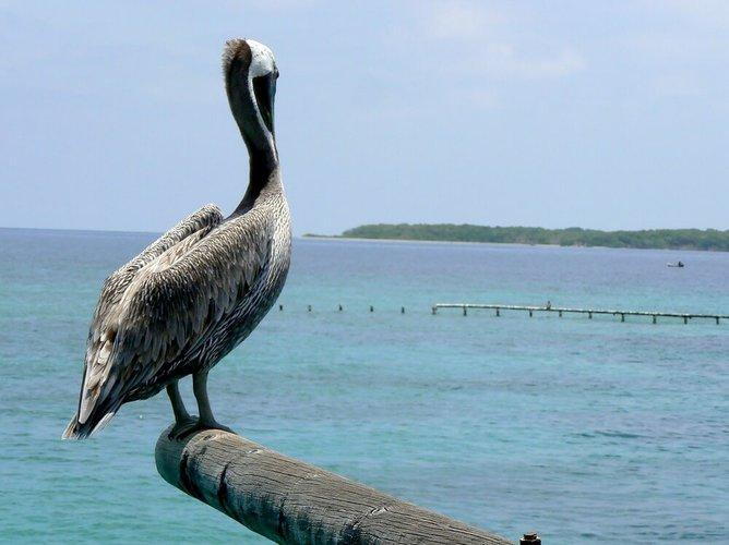 things-to-do-cartagena-colombia-rosario-islands-boat-rental-sailo