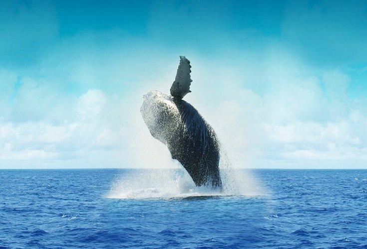 sailing-la-paz-mexico-whale-watching-sailo-boat-rental