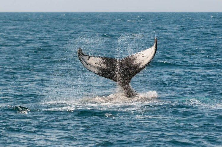 yacht-charter-newport-beach-sailo-whale-watching