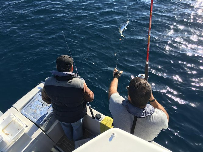 Come join the excitement of fishing in Setúbal, Portugal aboard 30' Rodman Ventu