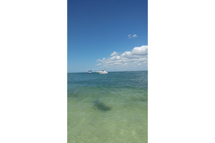 Sea Ray's 31.0 feet in Tarpon Springs