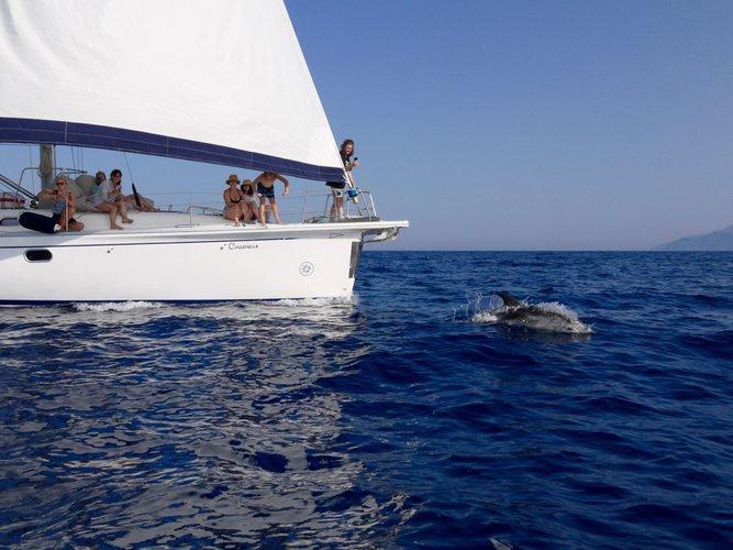 Sailing dolphin