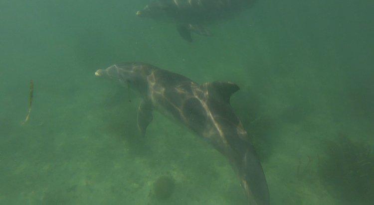 Sea Hunter's 35.0 feet in Miami